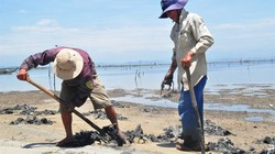 Thừa Thiên- Huế: Bờ biển tan hoang vì dân đổ xô đào địa sâm