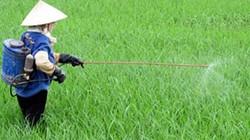 Cây lúa bị rầy nâu, sâu cuốn lá, bệnh lem lép hạt cần phun thuốc gì?