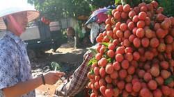 Vải Trung Quốc nhập ngược về Việt Nam: Các tiểu thương tiết lộ gì?