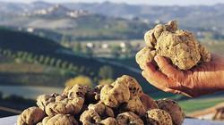 """Điểm mặt 9 loại nông sản """"đắt giật mình"""" trên thế giới"""