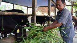Câu lạc bộ khuyến nông của người dân tộc: Góp nhỏ, thu lớn
