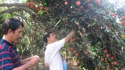 Đông Nam Bộ: Khô hạn làm cây rụng bông, rụng quả