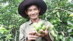 Trồng chanh không hạt thu hàng trăm triệu đồng