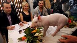Độc nhất vô nhị: Lợn xúng xính thi hoa hậu