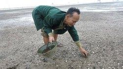 Nghệ An: Ngao chết hàng loạt, nông dân trắng tay