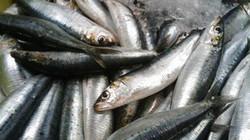 7 loại thực phẩm cung cấp omega-3 tốt nhất