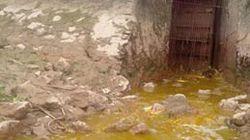 Nhà máy giấy gây ô nhiễm môi trường