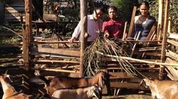 Chị B'Bop và đàn dê nghĩa tình giúp bà con thoát nghèo