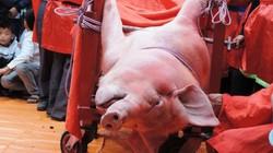 """Không có """"lễ hội đâm trâu"""", """"lễ hội chém lợn""""…"""