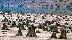17 bức ảnh về môi trường bị tàn phá khiến người xem giật mình