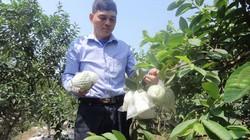Thủ lĩnh nông dân đi tiên phong bằng vườn cây 300 triệu