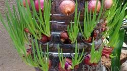 """""""Tuyệt chiêu"""" tự trồng hành lá tại gia: Vừa sạch vừa xinh"""