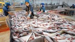 Dè dặt bán cá tra vào Mỹ