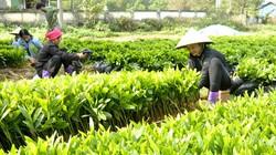 3 tháng đầu năm, trồng rừng đạt 13.416ha