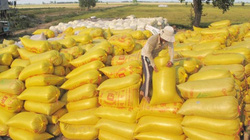 Mua tạm trữ thóc, gạo: Lãi suất hỗ trợ tiền vay không quá 7%/năm