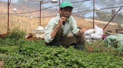 Trồng 100m2 rau rừng, thu hơn 40 triệu đồng/năm