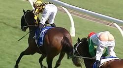 Clip: VĐV đua ngựa dính tai nạn hy hữu khó tin