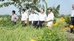 Lãnh đạo Hội NDVN kiểm tra xây dựng nông thôn mới Đồng Tháp