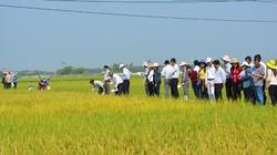 Nông nghiệp xứ Quảng đột phá từ giống
