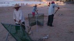 Hội tham gia làm sạch bờ biển