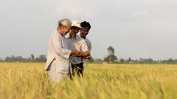 Lo thiếu nhân lực làm HTX nông nghiệp kiểu mới