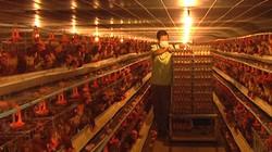 Cúp điện, trại gà mất tiền triệu mỗi ngày