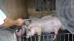 """Chùm ảnh: Muôn kiểu """"nâng niu"""" chống nóng cho vật nuôi, cây trồng"""