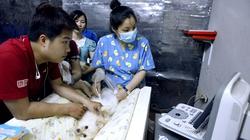 Giới trẻ Hà thành nô nức mang chó, mèo khám miễn phí