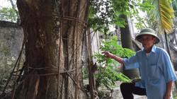 """Vụ việc """"tranh"""" gỗ sưa ở Hà Nội: Người dân mua bán đúng pháp luật"""