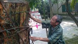 """Vụ việc """"tranh"""" gỗ sưa ở Hà Nội: Xử lý chậm do đợi... Interpol trả lời"""