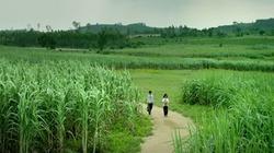 5 phim Việt có cảnh đẹp như thiên đường