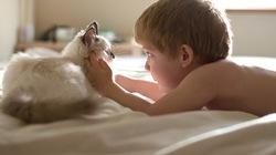 Bộ ảnh đẹp ngỡ ngàng của bé trai bên chú mèo