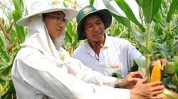 Cây trồng biến đổi gen giúp cải thiện môi trường