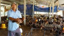 Nông dân khá giả nhờ kinh tế vườn, trang trại