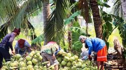 """Những """"vụ mùa vô hại"""" cứu nền nông nghiệp ASEAN"""