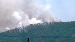 Đã khống chế được vụ cháy rừng phòng hộ ở Thanh Hóa