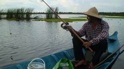 Thú buông câu bắt cá lung bàu rừng U Minh Thượng