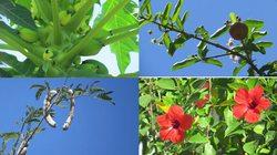 Nắng nóng, tìm vào cây, hoa trái dịu mát lòng người!