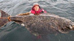 Cá bơn khổng lồ dài gấp rưỡi người trưởng thành