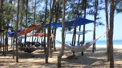 Quảng Ngãi: Cả làng kéo nhau ra rừng dương trốn nắng