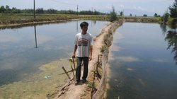 Tôm, cá chết hàng loạt, nông dân lâm cảnh nợ nần