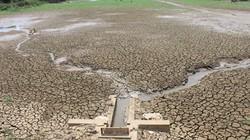 Nắng hạn làm 7.000 cây trồng ảnh hưởng