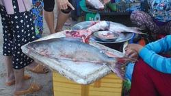 Ngư dân Huế trúng mẻ cá thiều gần 4 tỷ đồng