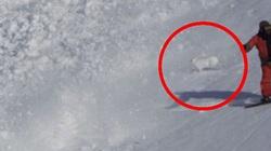 Video: Chú thỏ thoát chết thần kỳ trong trận lở tuyết