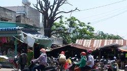 Nguy hiểm họp chợ dưới cây cổ thụ chết khô