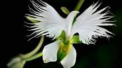 Loài hoa lạ hình chim hạc sải cánh tuyệt đẹp