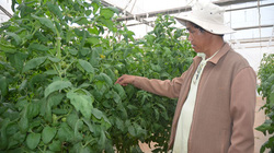 """Gắn kết """"4 nhà"""" trong dạy nghề cho nông dân: Sống tốt bằng nghề"""