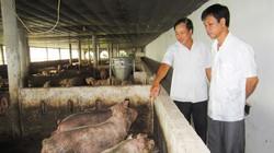 """Khi nhà nông phải """"ghen tỵ"""" với... lợn"""