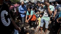Lễ hội thịt chó TQ: Trả 24 triệu đồng cứu mạng 100 con chó
