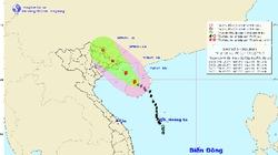 Đêm nay, Quảng Ninh đón gió bão Kujira giật cấp 9-10